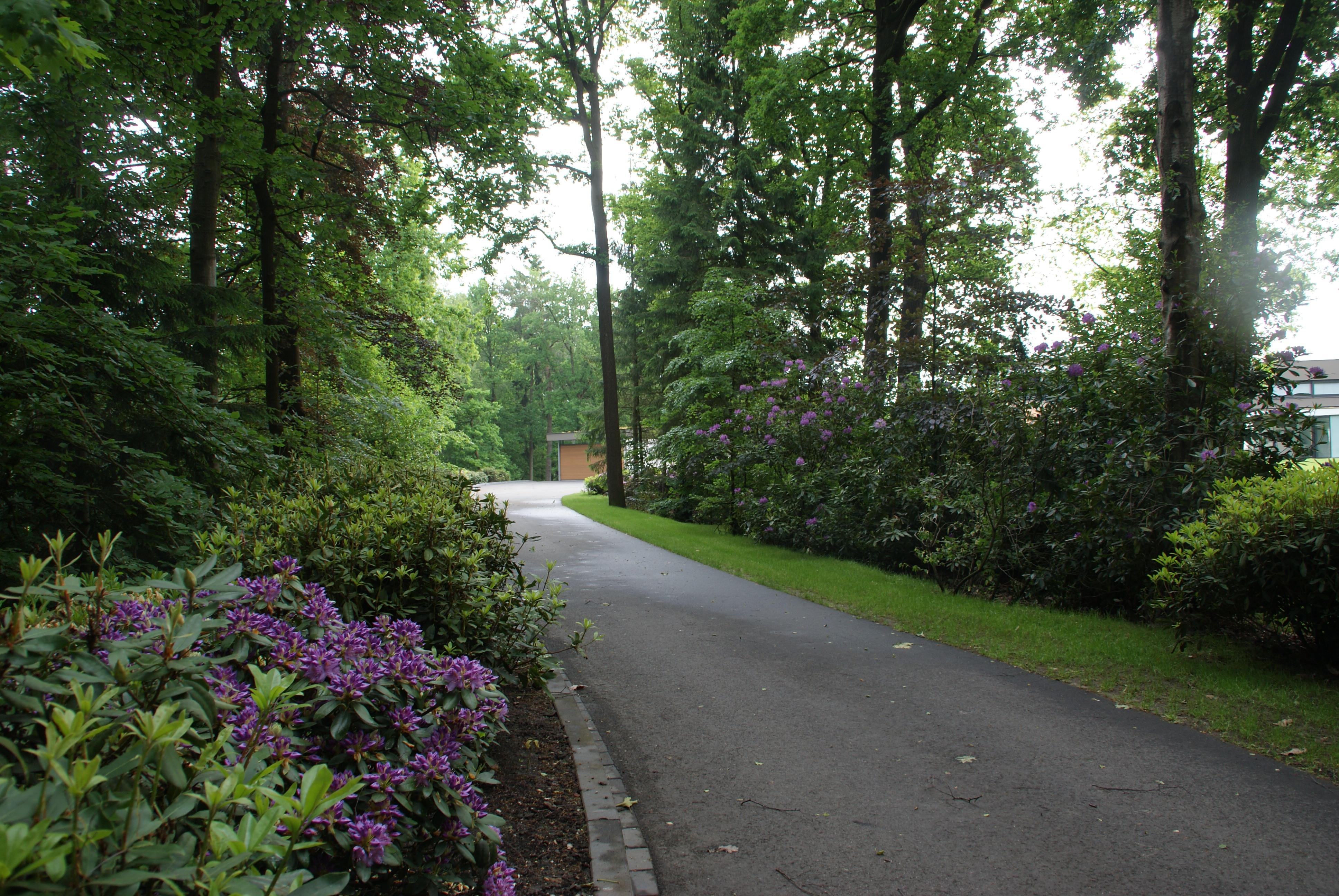 Natuurlijke tuin Rhododendron en oprijlaan
